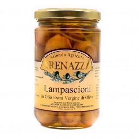 ARENAZZA LAMPASCIONI EVO GR.314